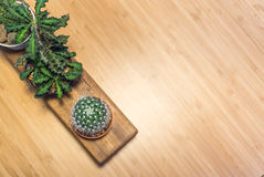 Small cactus in vintage place . Royalty Free Stock Photography