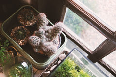 Small cactus in vintage place . Royalty Free Stock Image