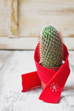 Small cactus Stock Images
