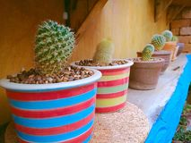 Small cactuses. Small cactuses in many types and shapes with colorful background Stock Photos