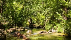 Small Calm Mountain River Flowing In Sunny Green. Tranquil scene. In the frame there is a picturesque, bright view of greenery moved my light breeze and calm stock video