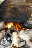 Small campfire flames Royalty Free Stock Image