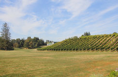 Small Canadian Vineyard Royalty Free Stock Image