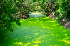 Small canal full of duckweed Royalty Free Stock Image