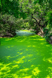 Small canal full of duckweed Stock Photos