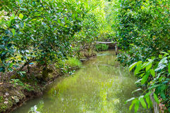 Small canal in Mekong Delta. Royalty Free Stock Images