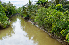 Small canal in Mekong Delta. Stock Image