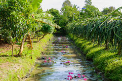 Small canal in Mekong Delta. Stock Photo