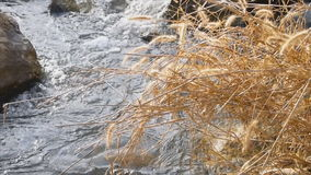 Small canal with rock and dry grass stock footage
