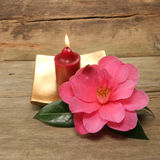 Small candle and Camellia. Flower against rustic wood Stock Image