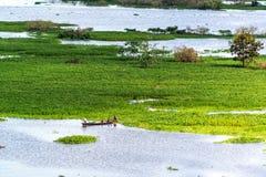 Small Canoe in the Amazon Royalty Free Stock Photo