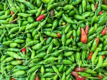 Small capsicum or guinea pepper background. Fresh organic vegetable at the morning market royalty free stock images