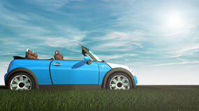 Small car on grass and summer Royalty Free Stock Images