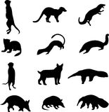 Small carnivores and anteaters. Small mammals from around the world Stock Photo