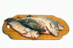 Small carp;. Just caught, freshwater fish, small carp, brushed on scales Royalty Free Stock Images