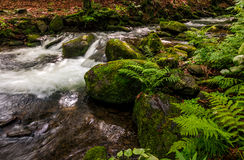 Small cascade on the river among bouders. Small cascades on the forest river among huge boulders covered with moss. dreamy Carpathian landscape Stock Photo