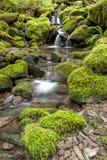 Small cascades along a stream. Stock Image