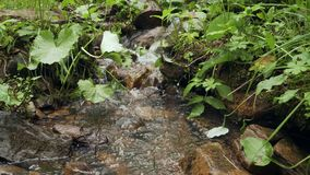 Small cascading stream with lush green vegetation in the forest. Close-up small cascading stream with lush green vegetation in the forest stock footage