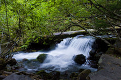 Small cascading waterfall. A small waterfall in the shade of alders Stock Photo