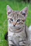 Small cat stock photography