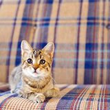 Small Cat Stock Images