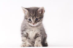 Small cat Royalty Free Stock Image