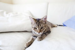 Small Cat. On the sofa Stock Photo