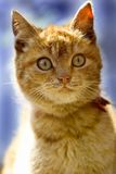 Small cat. Photo of small cat Royalty Free Stock Image