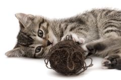 Small cat Royalty Free Stock Photography