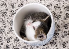 Small cat Stock Image