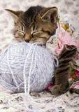 Small cat Royalty Free Stock Photos