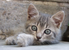 Small cat. A kittie, lying on the ground Royalty Free Stock Photo