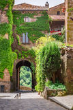 Small cat in ancient city overgrown with ivy Royalty Free Stock Photos