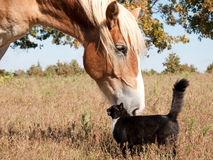 Small cat and a big horse - best friends Royalty Free Stock Photos