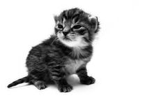 Small cat in BW Stock Photos