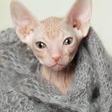 Small cat closeup Stock Image