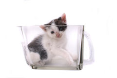 Small cat in the glass Stock Photography
