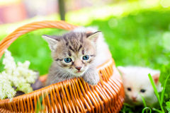 Small cat on grass Royalty Free Stock Photography