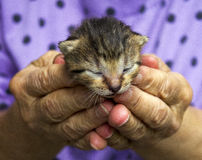 Small cat Stock Photo
