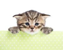 Small cat or kitten in cardboard box Stock Image
