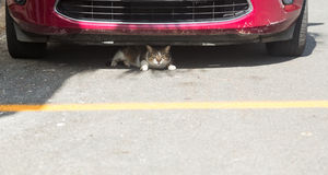 Small cat or kitten hiding under front of car. Small cat or kitten hiding under fender of car in parking lot or road Royalty Free Stock Images