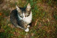 Small Cat Kitten Looking Up from Green Spring Stock Images