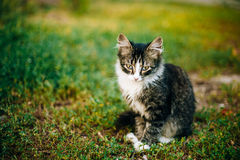 Small Cat Kitten Sit In Green Summer Grass Royalty Free Stock Images