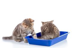 Small cat kittens in toilet tray box with litter isolated on white. Two cat kittens 2 months ago in toilet tray box with litter isolated on white background royalty free stock images