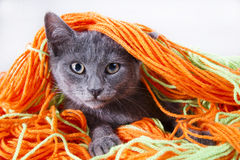 Small Cat stock image