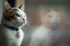A small cat looking out a window stock image
