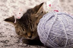 Small cat and mouse Stock Images