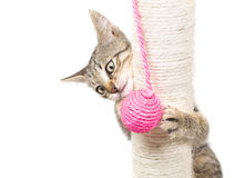 Small cat playing Stock Images