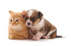 Small cat and puppy. On a white background stock photo
