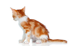 Small cat seen from behind Royalty Free Stock Photo